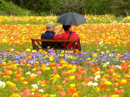 世羅の花畑 036