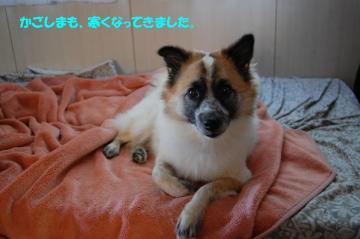 愛知旅行2009 092