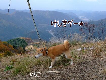 本物のお山~