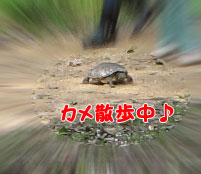 20080405-4.jpg