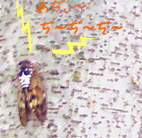 20080808-1.jpg