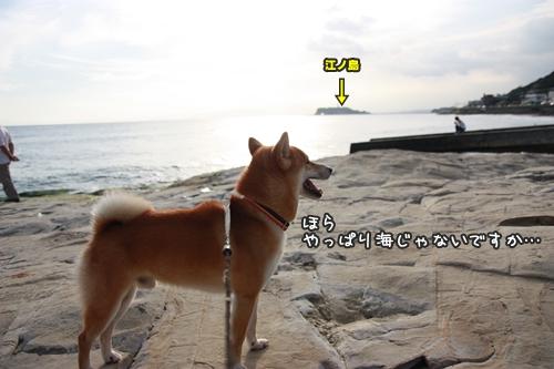 200909245.jpg
