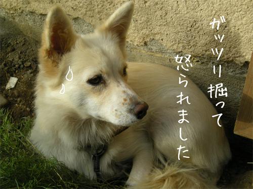 怒られシル10.6