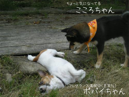 こころちゃん&ポパイちゃん