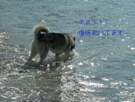 11.2海3