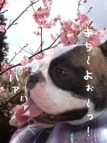 吉田公園1