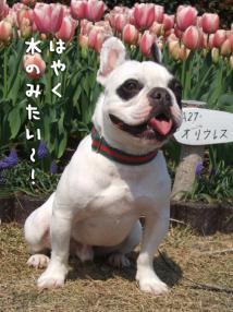 吉田公園2