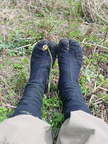ワラビと足袋