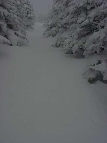 08.1.1新雪