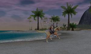 海岸を走る