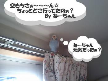 空ちゃん発見♪