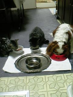 3匹の食事