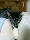 挟まれた状態で寝るネコ