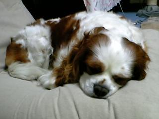 居眠りサクラさん