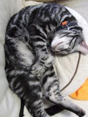 すごい寝相1