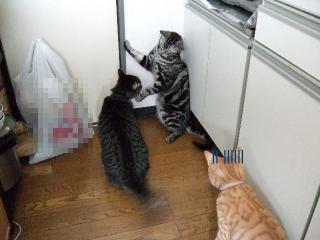 2007_0418soramamedai0018.jpg