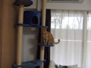 2007_1127cats0021.jpg