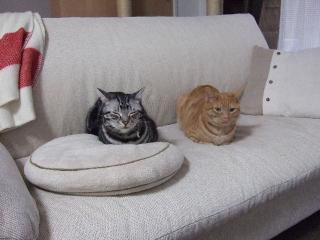 2007_1130cats0032.jpg