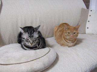 2007_1130cats0033.jpg