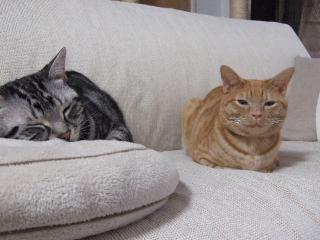 2007_1130cats0034.jpg
