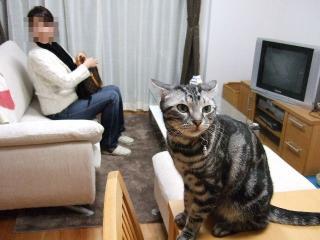 2007_1203cats0037.jpg
