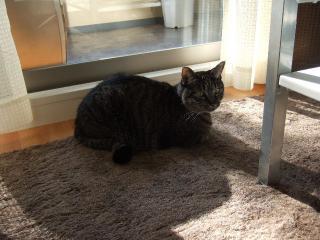 2007_1204cats0040.jpg