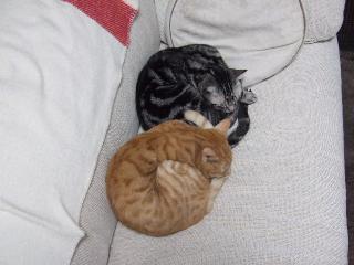 2007_1210cats0004.jpg
