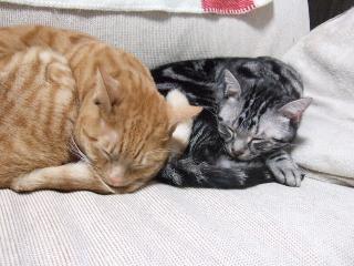 2007_1210cats0005.jpg