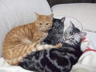 2007_1212cats0002.jpg