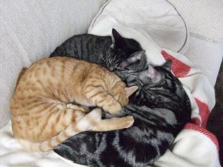 2007_1212cats0010.jpg