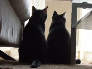 2007_1215cats0007.jpg