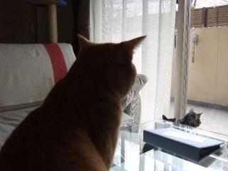 2007_1215cats0013.jpg