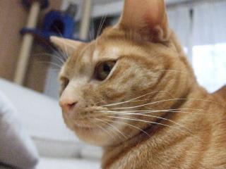 2007_1220cats0003.jpg