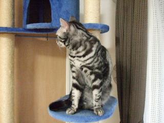 2007_1221cats0002.jpg