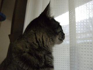 2007_1221cats0004.jpg