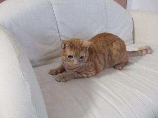 2007_1224cats0005.jpg