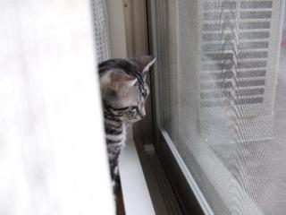 2007_1226cats0006.jpg