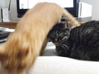 2008_0108cats0002.jpg