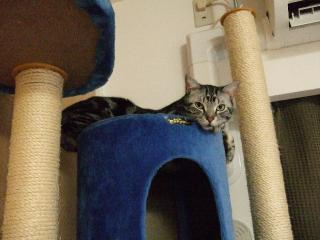 2008_0108cats0004.jpg