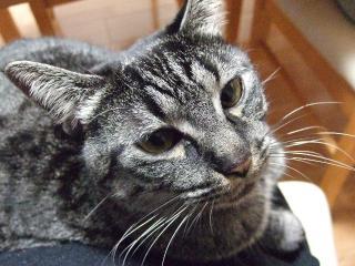 2008_0109cats0002.jpg