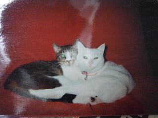 2008_0126cats0006.jpg