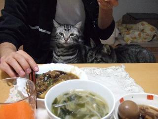 2008_0201cats0001.jpg