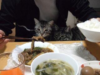 2008_0201cats0002.jpg