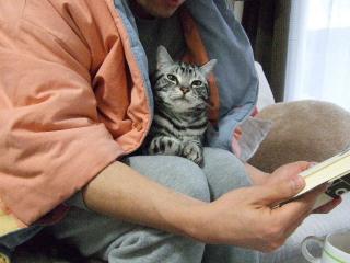 2008_0203cats0003.jpg