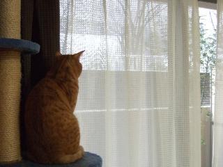 2008_0203cats0007.jpg