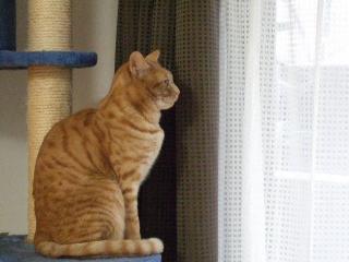 2008_0203cats0008.jpg