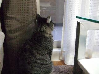 2008_0206cats00011.jpg