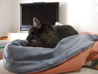 2008_0214cats0001.jpg