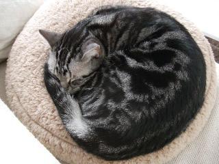 2008_0214cats0003.jpg