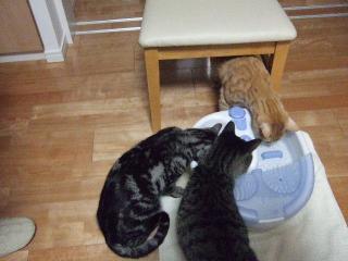 2008_0320cats0001.jpg